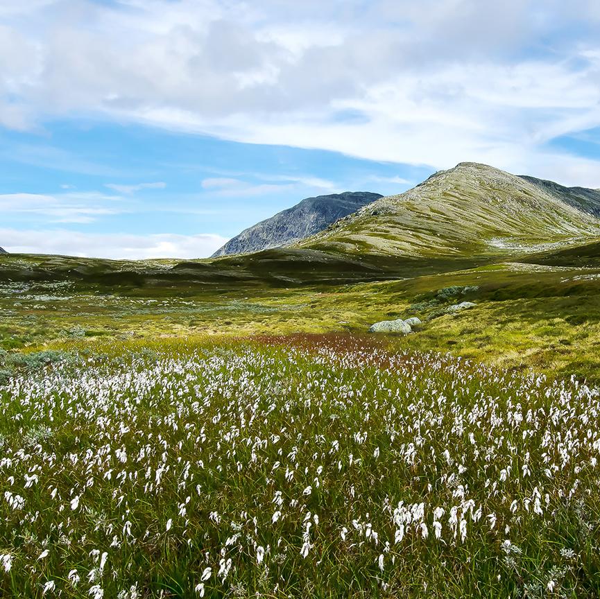 Bilde av naturpark