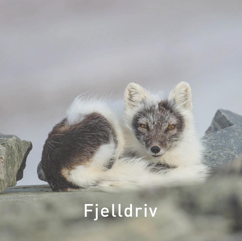 Til Fjelldriv som tilbyr naturopplevelser.