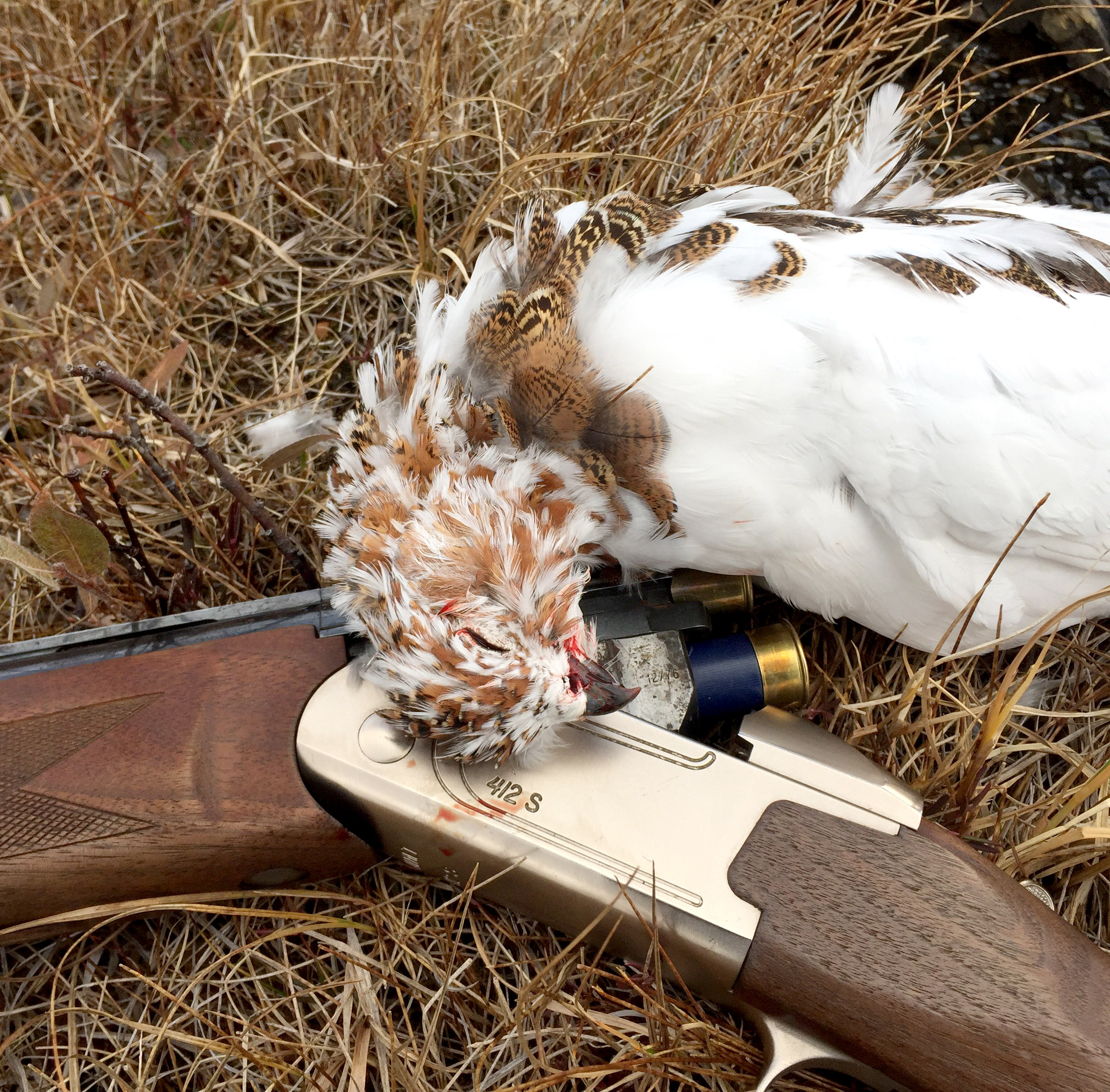 Jaktgevær med ei skutt rype